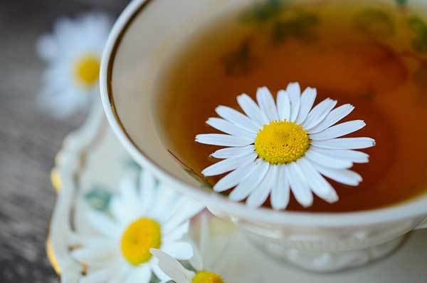 chamomile tea benefits for dogs