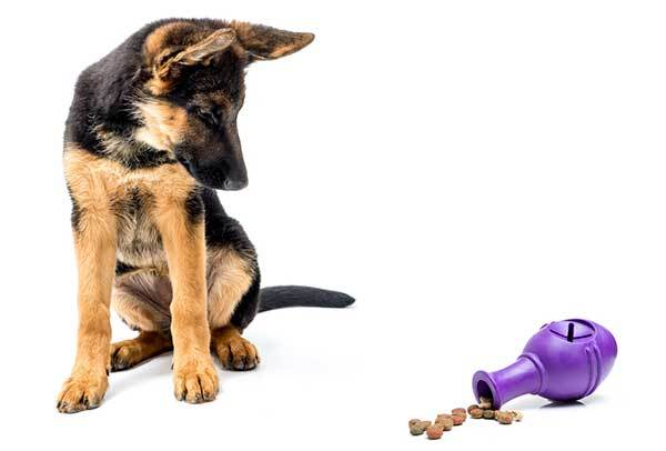 german shepherd puppy and treat dispensing toy
