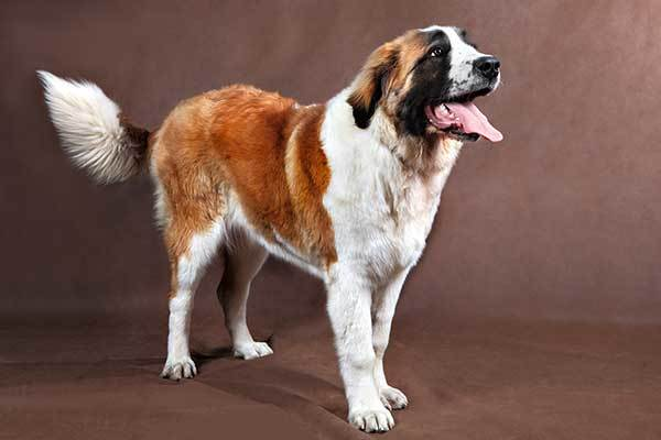 Funny Male Big Dog Names