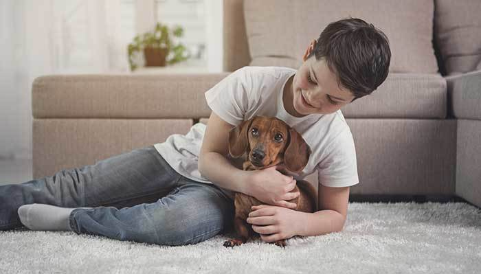 Are Dachshunds Good with Babies?