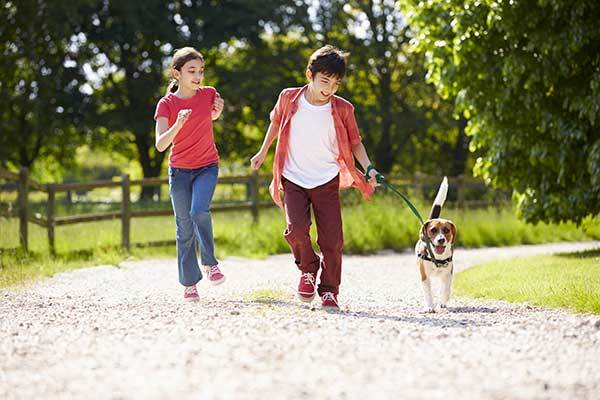 beagle dog running with kids