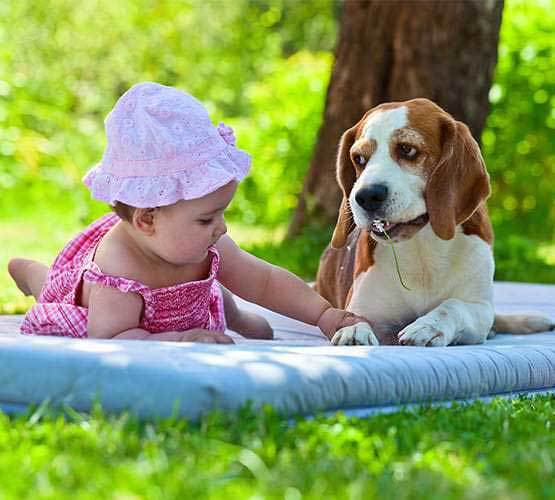 beagle and toddler