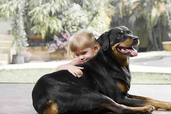 are rottweilers good with babies?
