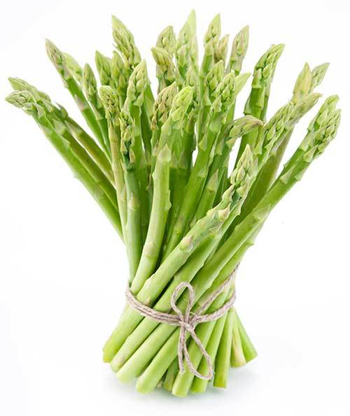 Can Diabetic Dogs Eat Asparagus?