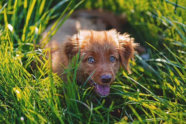 happy adorable dog in the grass