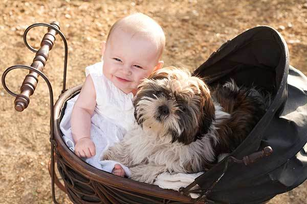 are shih tzus good with toddlers?