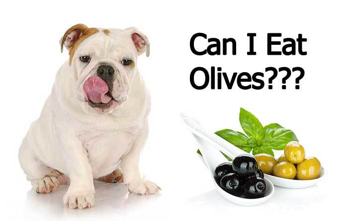 are olives safe for dogs?