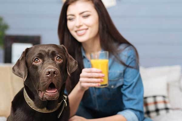 is orange juice bad for dogs?