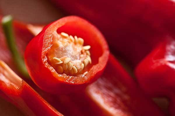 red bell pepper for dogs
