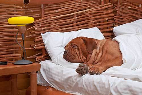 Dog Comfortably Sleeping in bed