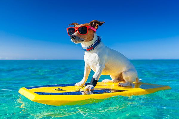 Hawaiian Dog Names – Over 500 Inspiring Ideas for Naming Your Pup