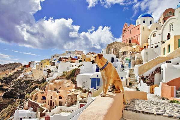 dog in Greece