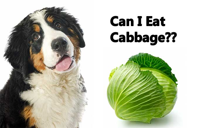 Cabbage for dogs