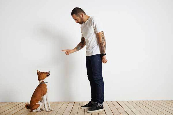 a cute dog with dog trainer