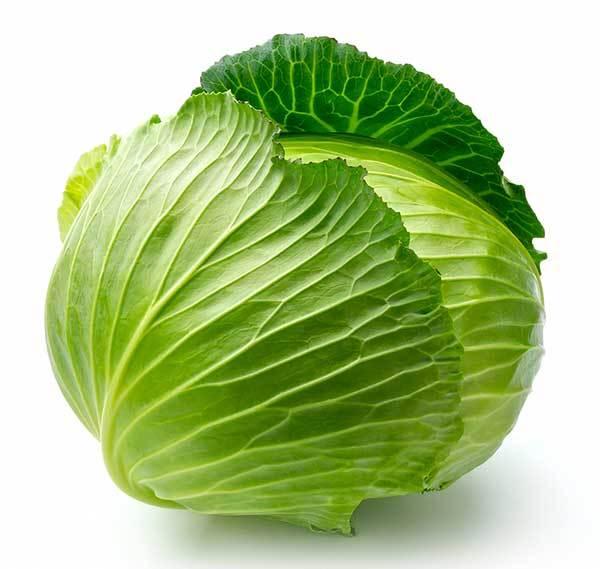 green cabbage for dogs