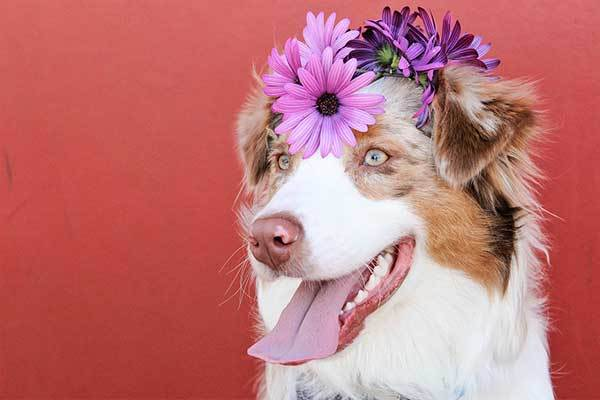 Hawaiian names for female dogs