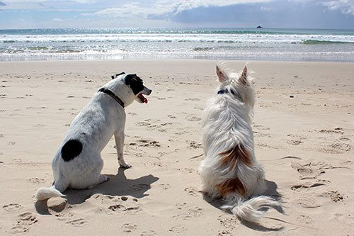 2 cute dogs at the beach summer time