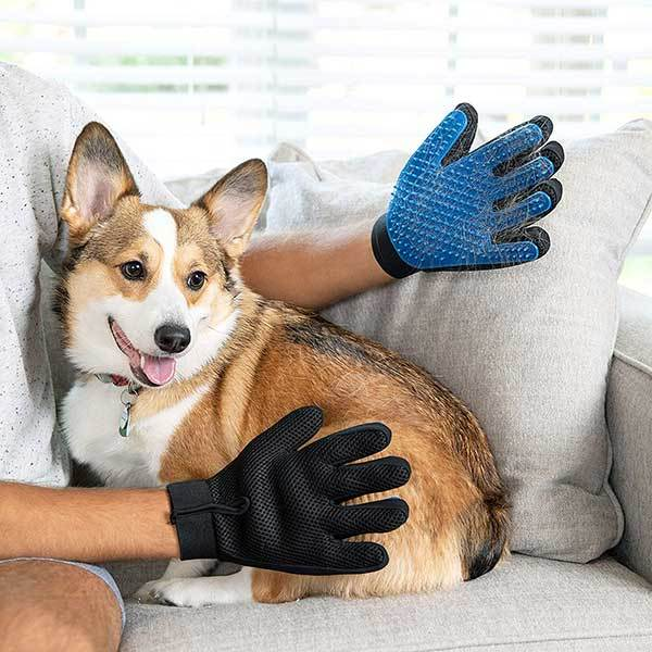 brushing dog with gloves