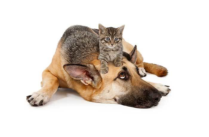 can german shepherds get along with cats?