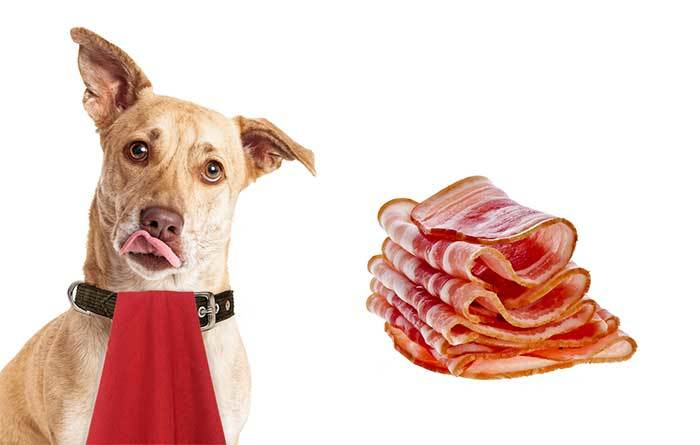 Can My Dog Eat Bacon?