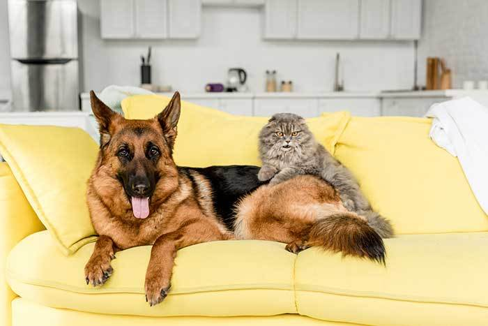 can german shepherds and cats get along?