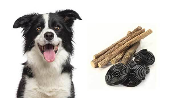 can dogs eat licorice?