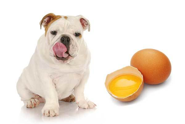 can i feed my dog eggs everyday?