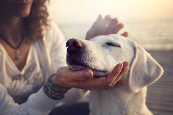 signs your dog trusts you