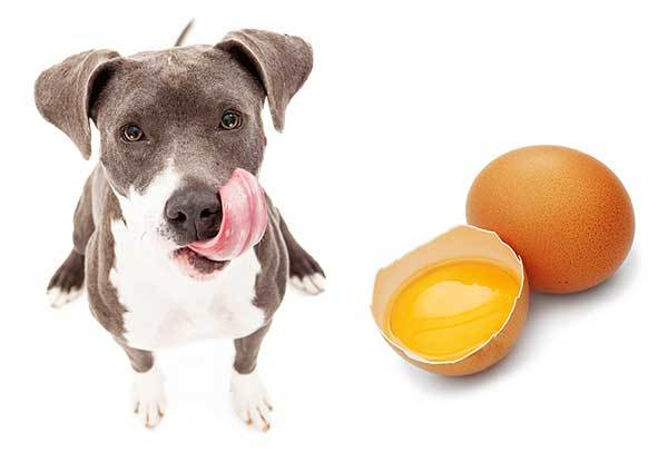 How Should You Give Eggs To A Dog?