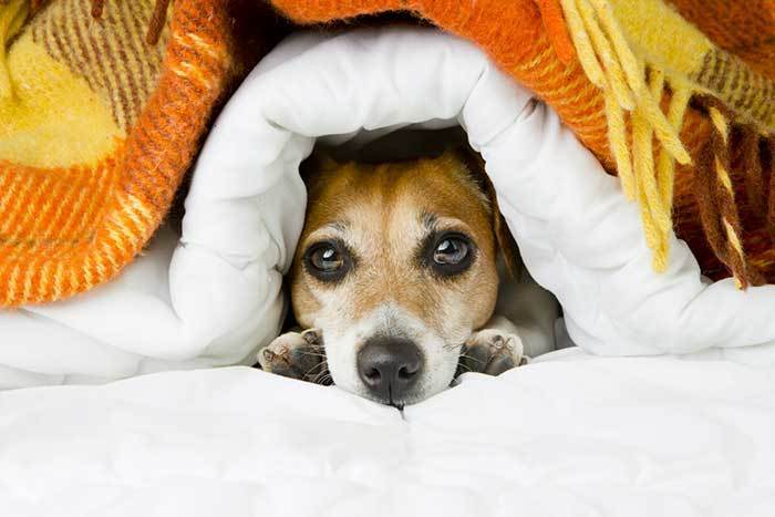 Can my Dog breath under the blankets or covers?