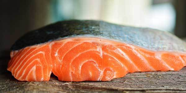 is salmon good for dogs?