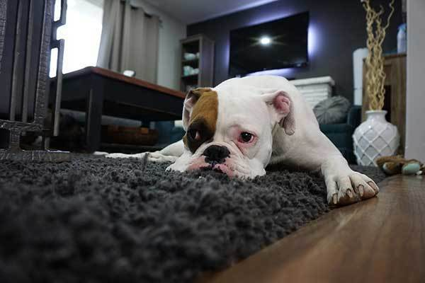 cute dog on carpet at home