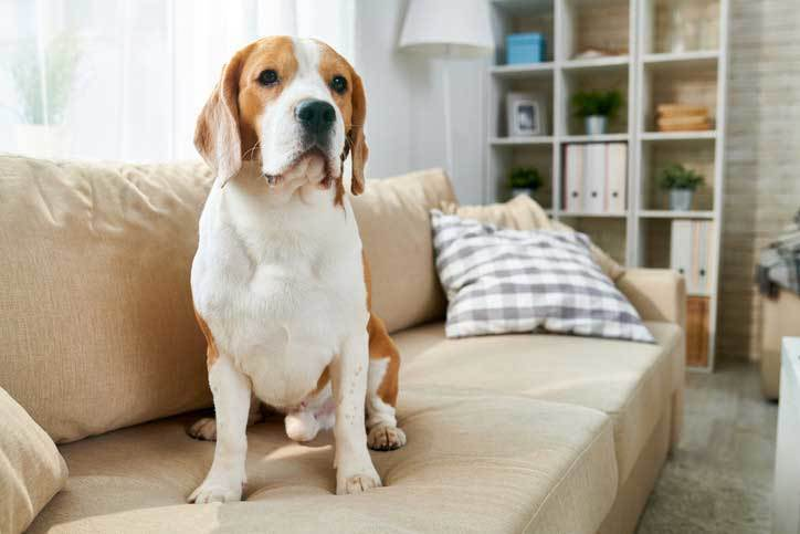 tips to get rid of dog smell in your house
