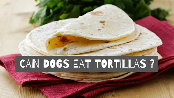 Can Dogs Eat Tortillas?