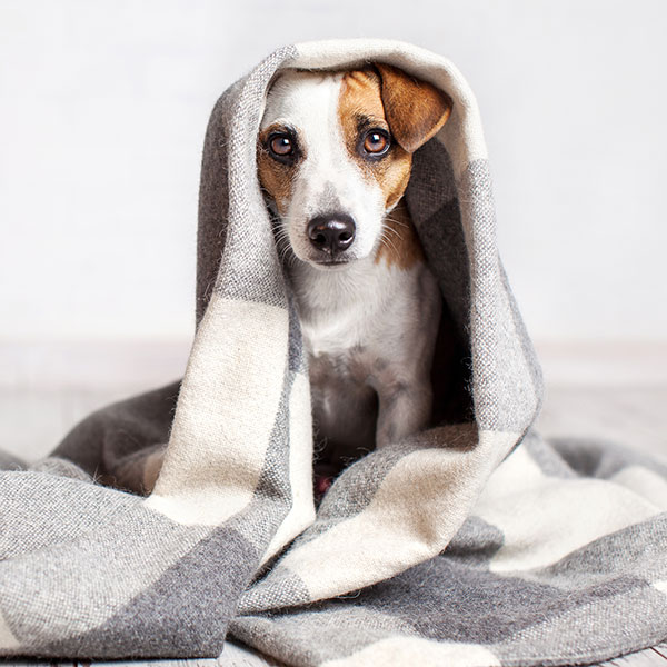 Can You Use Baby Wipes On Dogs? Here's The Answer!