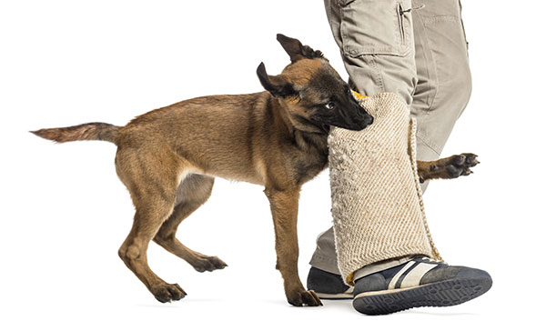 How to Stop Your Dog from Biting Your Feet?